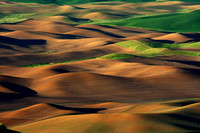 Palouse Fields, WA